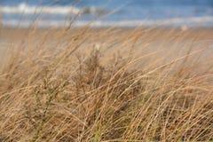 Brown morza trawa Obrazy Stock