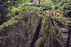Brown moss forest rock and some fern. Forest landscape with green and brown moss on the gray and black rocks and ferns around stock photo
