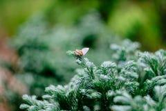 Brown Moth Royalty Free Stock Image