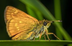 Brown Moth in Close-up Photography Stock Images