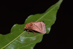 Brown moth on green leaf Stock Photos