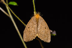 Brown moth in nature Stock Images