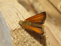 Brown moth resting on wood Royalty Free Stock Photo