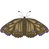 Brown moth. vector illustration. Drawing by hand. Brown moth. vector illustration. Drawing by hand Royalty Free Stock Photos