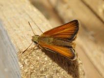 Brown-Motte, die auf Holz stillsteht Lizenzfreies Stockfoto