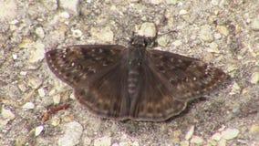 Brown-Motte lizenzfreies stockbild