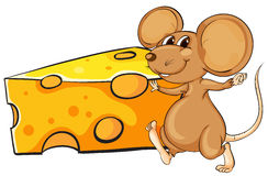 A brown mouse beside the big slice of cheese Stock Photography