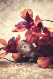 Brown mouse fall colors royalty free stock image