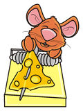 Brown mouse next to mousetrap Royalty Free Stock Photo