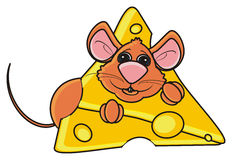 Brown mouse peeking out of a piece of cheese Royalty Free Stock Images