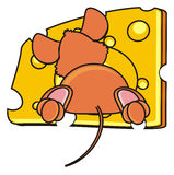 Brown mouse peeking out of a piece of cheese Royalty Free Stock Image