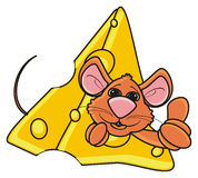 Brown mouse peeking out of a piece of cheese Royalty Free Stock Photography