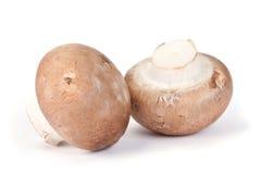 Brown mushroom Royalty Free Stock Photos