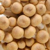 Brown mushroom Stock Photo