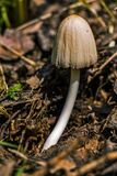 Brown Mushroom on Ground Focus Photography Stock Photos