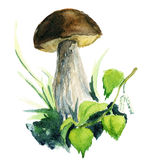 Brown mushroom paited with watercolor Royalty Free Stock Image
