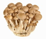 Brown mushroom. On white background Stock Photography
