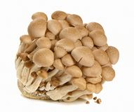 Brown mushroom. On white background stock photos