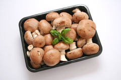 Brown mushrooms Stock Image