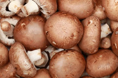 Free Brown Mushrooms Stock Photography - 28341662