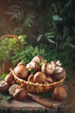 Brown mushrooms in a basket on a tree stump. Stock Images