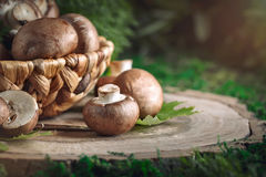 Brown mushrooms in a basket on a tree stump. Stock Image