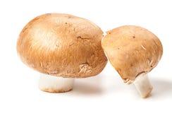 Brown mushrooms Stock Image