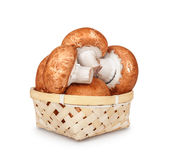 Brown mushrooms in a light basket Stock Image