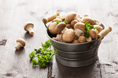 Brown mushrooms Stock Photo