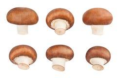 brown mushrooms royalty free stock images