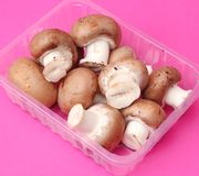 Brown mushrooms. Some fresh brown mushrooms in a bowl royalty free stock photo