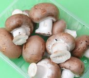 Brown mushrooms Royalty Free Stock Photography