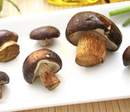 Brown mushrooms. Some raw brown mushrooms on a plate royalty free stock image