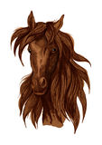 Brown mustang horse artistic portrait Royalty Free Stock Images