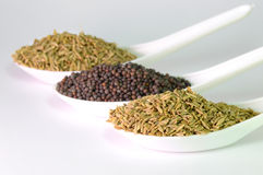 Brown Mustard Seeds and cumin seeds Stock Photos