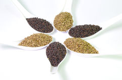 Brown Mustard Seeds and cumin seeds Stock Image