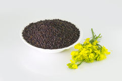 Brown Mustard seeds and mustard flower Stock Photography