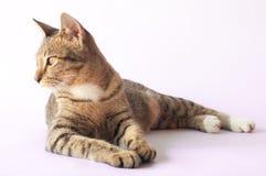 Brown mustert die Katze, die Seite schaut Stockbilder