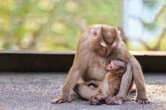 Brown-Mutteraffe mit ihrem netten Baby in der Beschaffenheit von Thailand Stockfotos