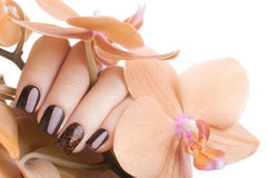 Brown nail polish on the nails. Stock Photos