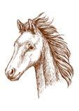 Brown nakreślenia koński ołówkowy portret Obrazy Stock
