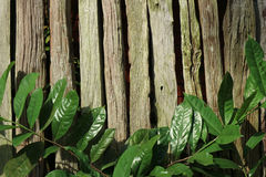Brown natural wooden fence with vibrant green tree leaves in morning sunlight. Background Royalty Free Stock Photos