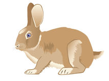 Brown nice hare Royalty Free Stock Photos