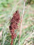 Brown nieboszczyk suszył liść części natury pola up zamknięte rośliny Obrazy Royalty Free