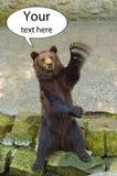 Brown niedźwiedź macha jego łapę tutaj twój teksta pojęcie Fotografia Stock