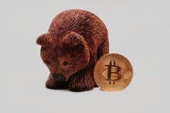 Brown niedźwiedź z Bitcoin z białym tłem Fotografia Stock