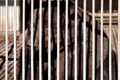 Brown niedźwiedź Obraz Stock