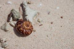 Brown-Oberteil auf weißem Sandstrand Kleiner Seashell Tropischer Naturgegenstand Ozeanwild lebende tiere lizenzfreies stockfoto