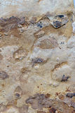 Brown and ochre stone. Closeup detail Stock Image