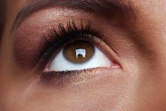 Brown oko obrazy royalty free